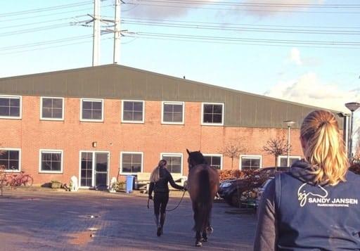 Online cursus happy & healthy voor je paard Sandy Jansen paardenosteopathie