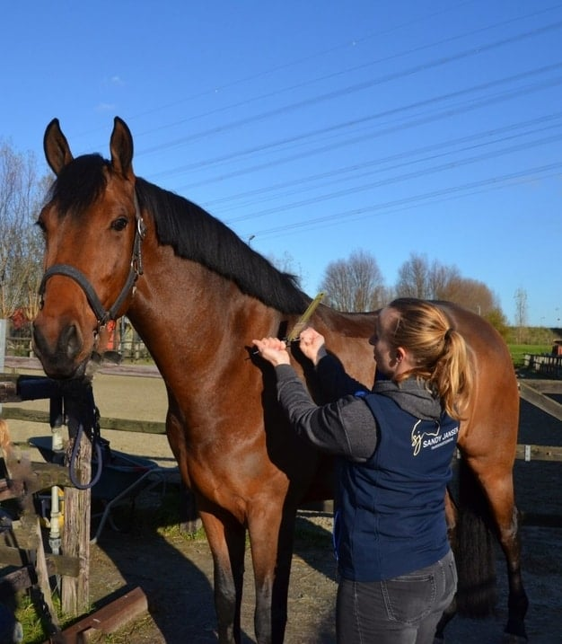Sandy Jansen Paardenosteopaat