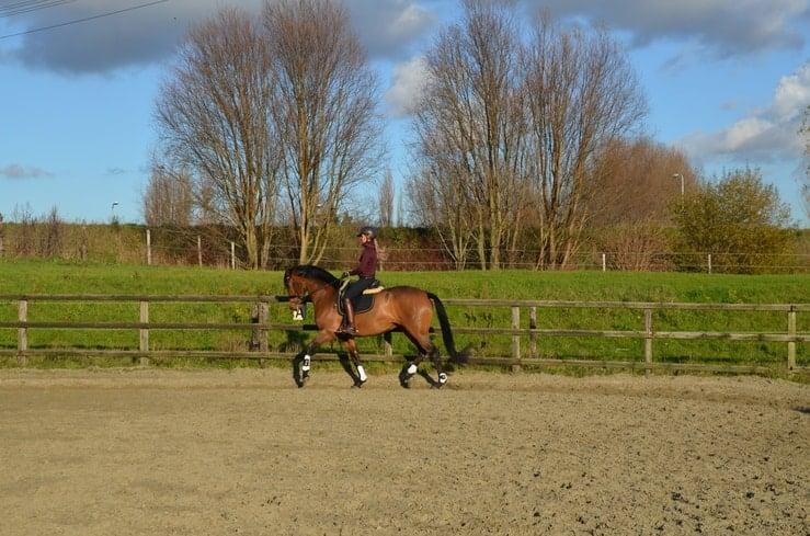 Vitaliteitsanalyse voor je paard Sandy Jansen paardenosteopaat
