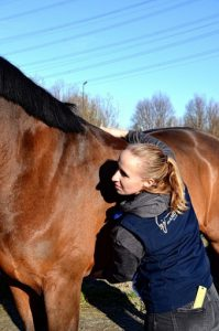 GRATIS e-book 5 blokkades bij het paard Sandy Jansen paardenosteopathie