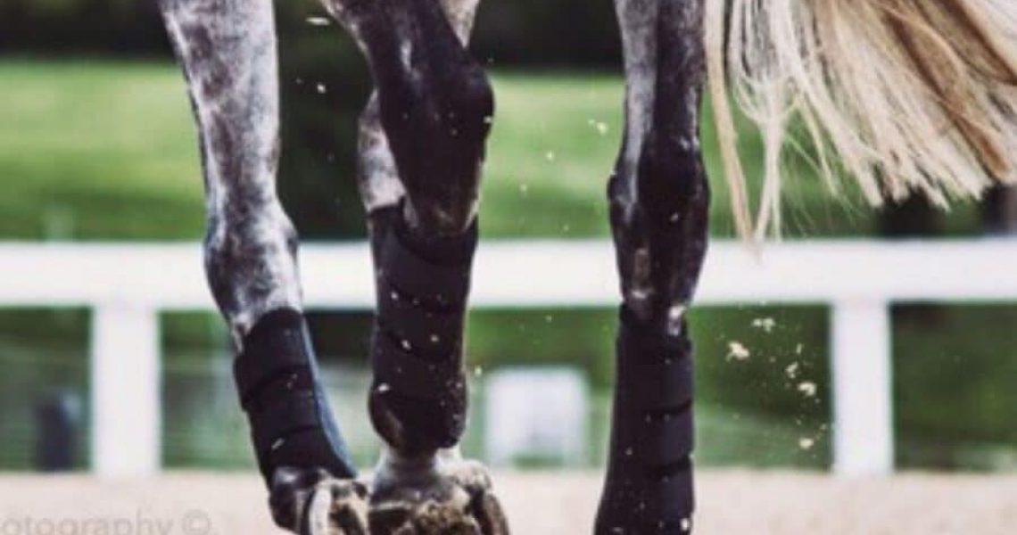 Peesblessure paard