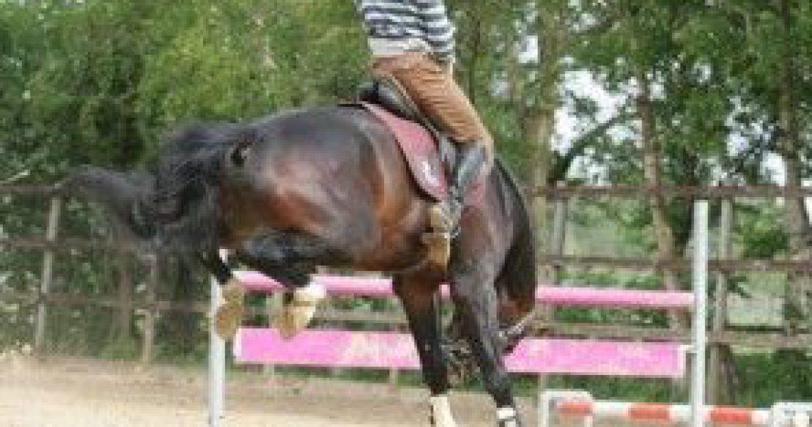 bokkend paard (3)