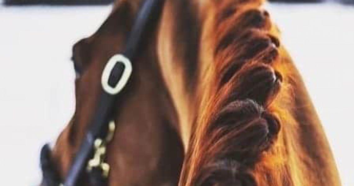 trainen paard